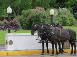 Horses - Posing for Photographs