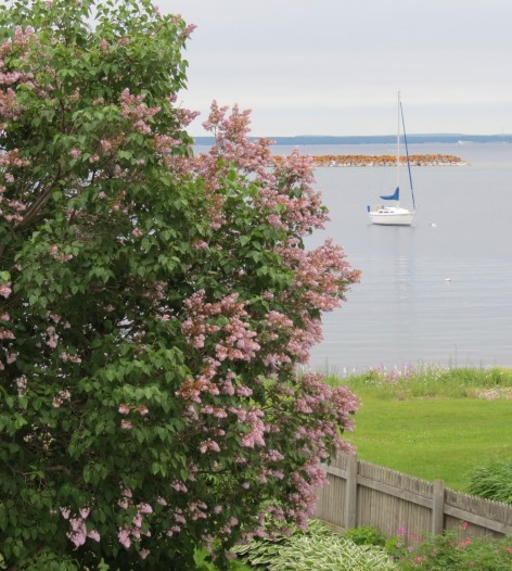 Lone Sailboat - Awaiting Captain and Crew