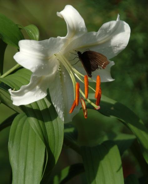 Butterfly:Flower